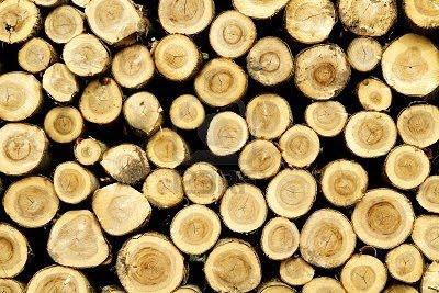 troncos de pino