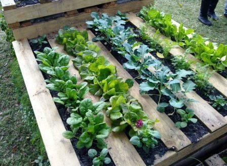 ideas-jardin-ecologico