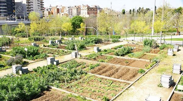 huerto-urbano en barcelona