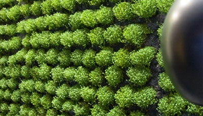 Il giardino verticale in casa arkitettura - Giardino verticale in casa ...