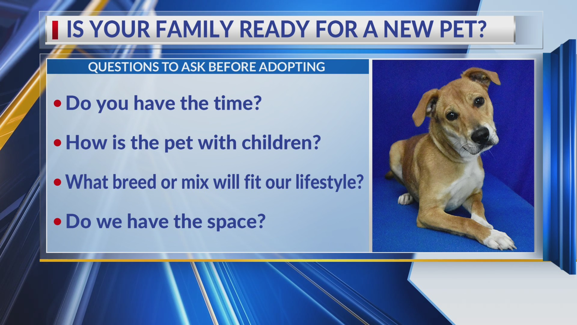 Pet Health: Is your family ready for a new pet?