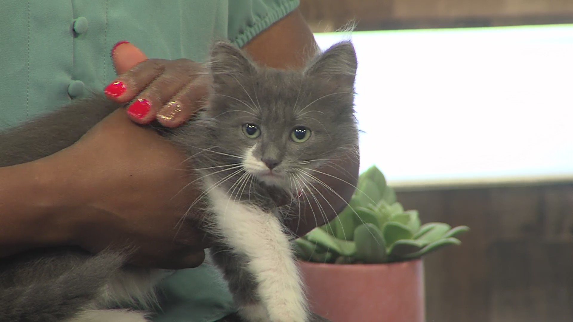 Pet of the Week: Fluffy and Fancy