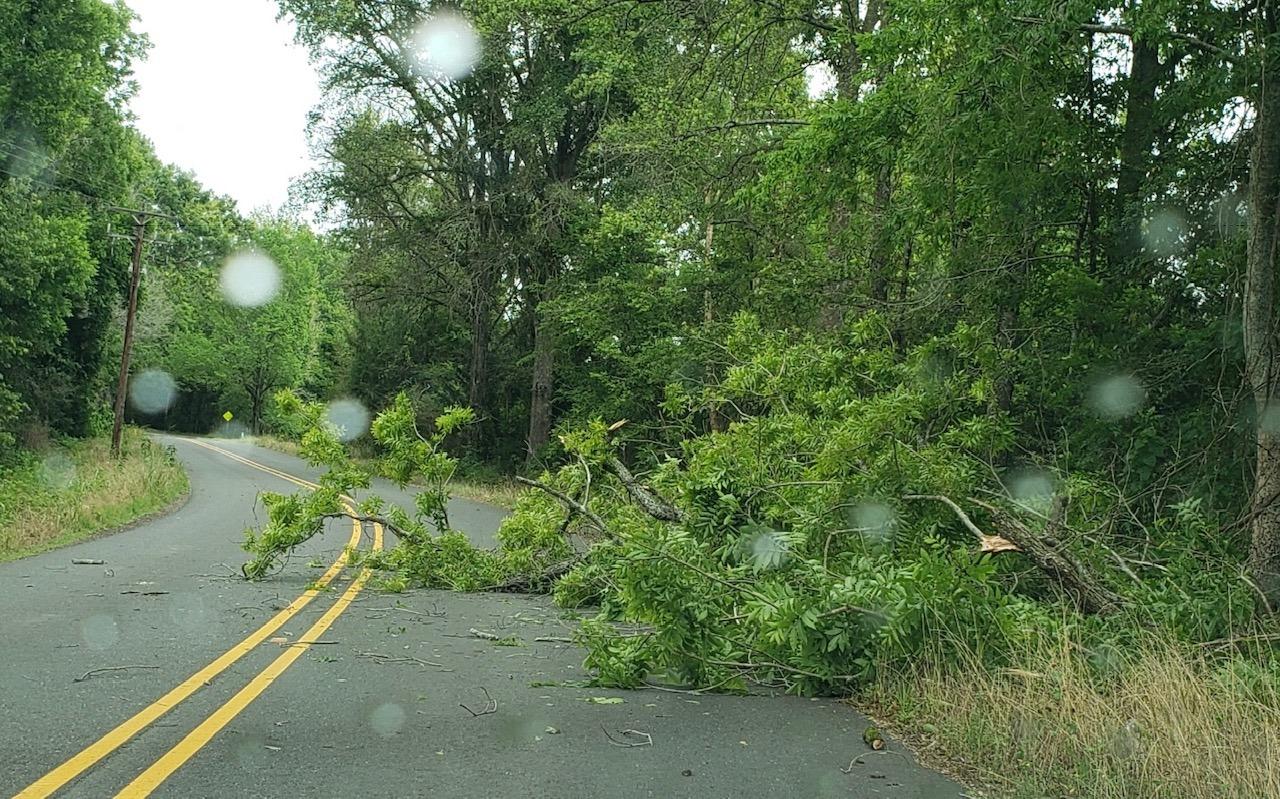 Tree down in Natchitoches Parish 6-16-19_1560708189502.jpg.jpg