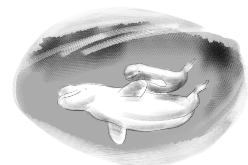 Illu Beluga-wale(c)kheymach