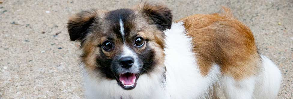 Adopt a Pet from the Animal Rescue League of Boston