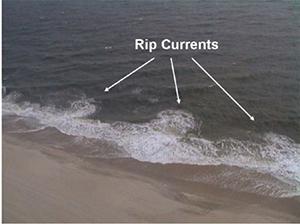 Image Courtesy University of Delaware Sea Grant College Program