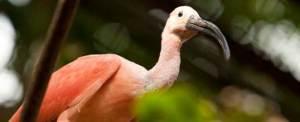 Outbound Bali Bird Park New 2015 a
