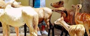 Bali Zoo Animal