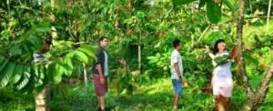 Adventure Bali Luwus Camp Agrotourism