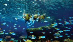 Adventure Cove Waterkpark - Rainbow Reef