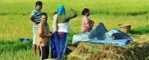 Bali Adventure Luwus Camp Farmer