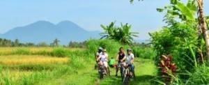 Bali Cycling Luwus camp Rice Filed