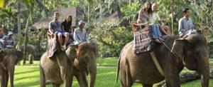 Paket Naik Gajah Bali Adventure