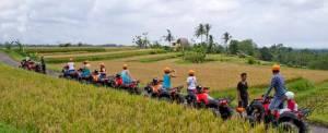 ATV Bali Batukaru Rice Terrace