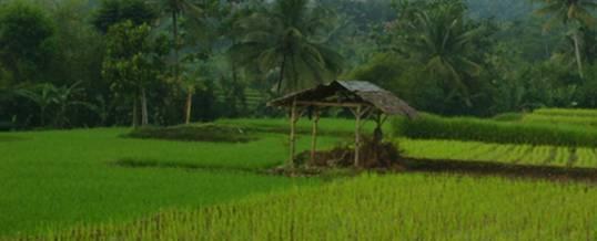 Adventure Bogor Rice Field
