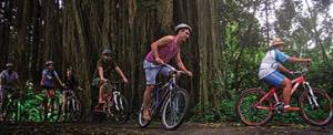 Outing Di Bali Cycling Ubud Camp Banyan Tree