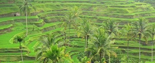 Paket Wisata Outbound di Ubud dan Sekitarnya