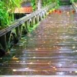 Jembatan Gantung Payangan Ubud