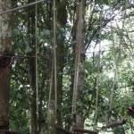 Outbound High Rope WWF Jalan Udara