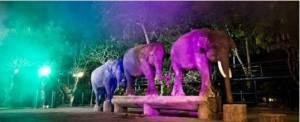Wisata Naik Gajah Bali Atraksi Malam