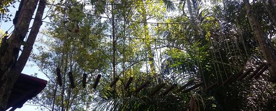Bali Outbound Jungle Adventure - Flying Fox 20718