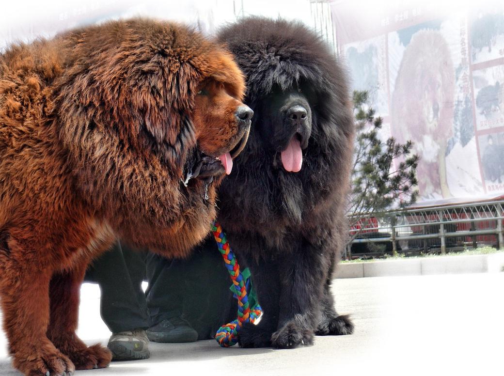 Russian Dog Breeds Largepet Photos Gallery