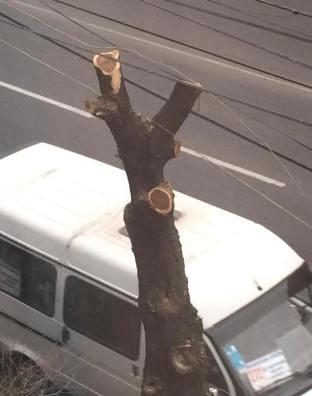 «Ոչ մի փողոց առանց էտված ծառի»,- Էտունց։