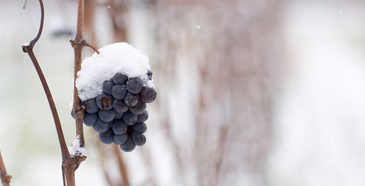 Vignes sous la neige  Armelle photographe en Bourgogne