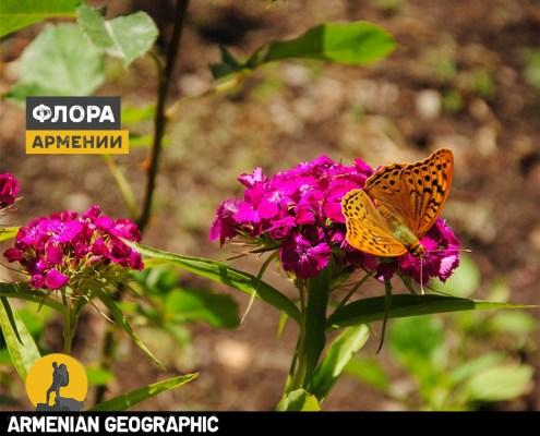 Флора Армении