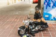 Harley Doginson