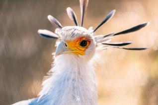 Bird at the San Diego Zoo