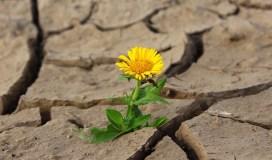 solitudine-rischi-come-superarla