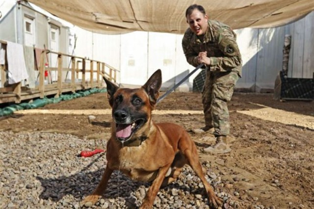 Rrobiek, a Belgian Malinois military working dog, and his handler, Army Staff Sgt. Charles Ogin, 3rd Infantry Regiment, practice bite training after work in Baghdad, Feb. 14, 2017. Rrobiek is a patrol and explosive detector dog who works hard with Ogin to ensure the safety of everyone inside the entry point gate at Union III in Baghdad.