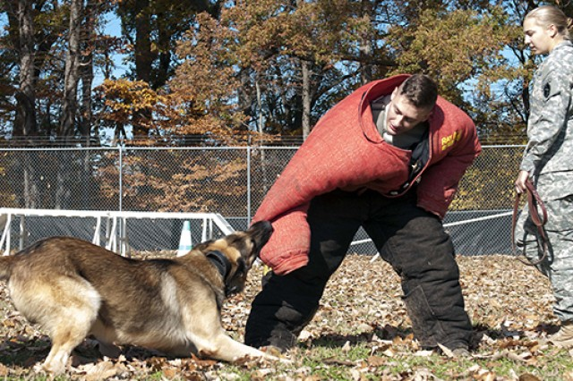 Army Spc. Michael Finochio tries to pull free from K-9 Ricky during bite training as Ricky's handler, Pfc. Sadie Vollendorf, looks on.