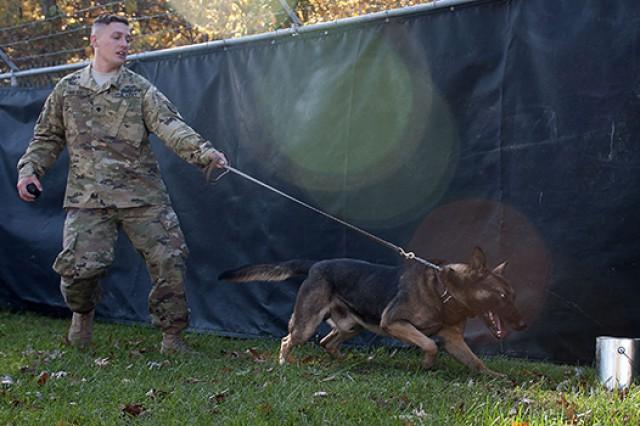Spc. Michael Finochio trains Izmos on explosives detection.