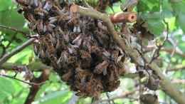 wilde-bijen-Bloei! in Arnhem