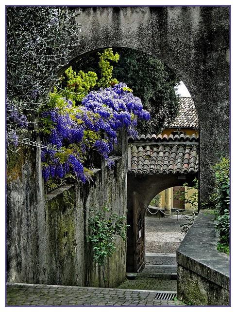 Wisteria Walkway, Lombardy, Tuscany, Italy