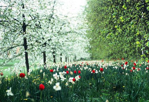 Spring, Trinity Meadow, Cambridge, England