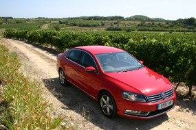 Red Passat surrounded by red wine grapes...