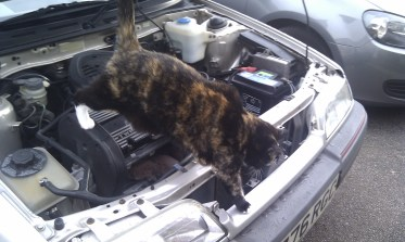 Stella the workshop Cat decrees my purchase as 'Fit for Purrpose'