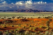 Drive Safari Wonderful Namibia
