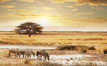 African Safari Desktop Background