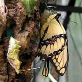 Botanischer Garten Schmetterlingsausstellung