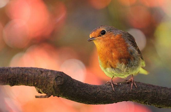 Die fünf schönsten Vogellehrpfade in und um München