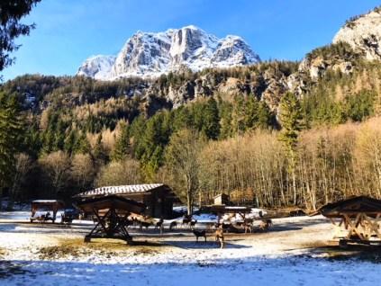 Mit der Kutsche zur Wildfütterung ins Klausbachtal