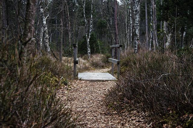 Der Moorlehrpfad in Prem bei Steingaden