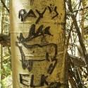 New Mexico Wilderness Areas – Ray's Elk, Colombine Hondo Wilderness Study Area