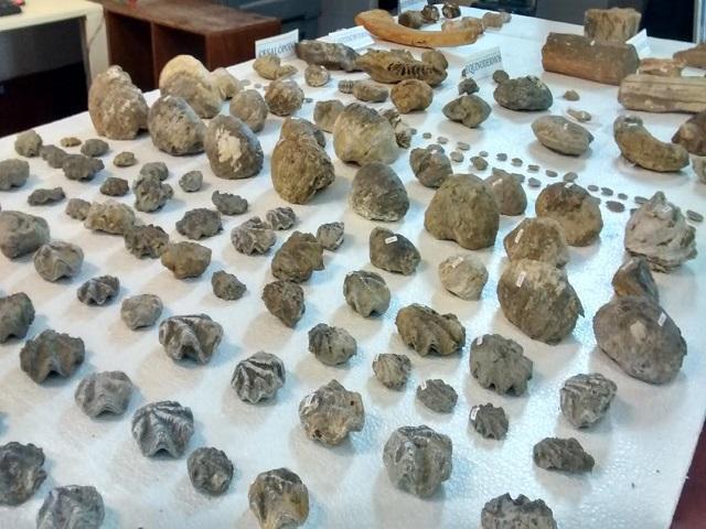 Museo Tumbas Reales recibe donación de piezas paleontológicas de más de 70 millones de años