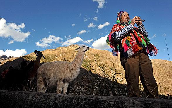Proyecto Llama Pack busca la revalorización y utilización de llamas