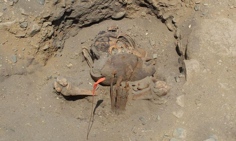 Descubren restos óseos y vasijas que pertenecerían a la cultura Chimú
